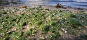 Очистка озера от камыша и водорослей